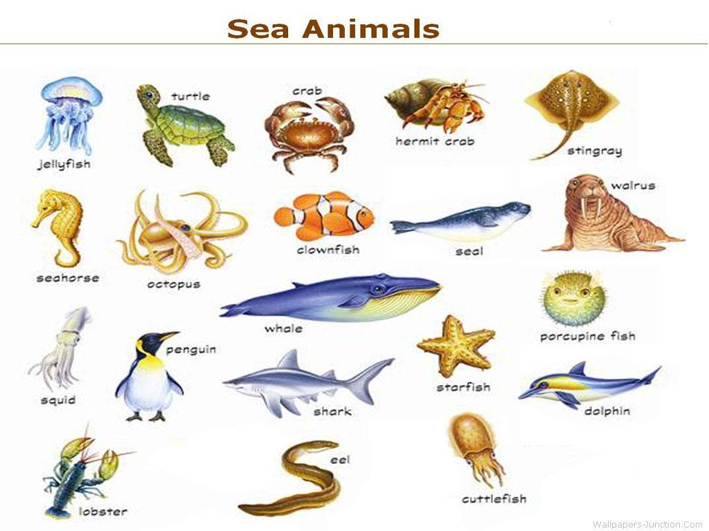 The Sea Animals Marine Organism Illustration Vintage Retro