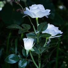 3 głowa biała róża kwiat lampa słoneczna dekoracyjne Led trawnik zewnętrzny lampa dom ogród sztuczny kwiat lampki nocne Ip44 wodoodporne lampy tanie tanio MUQGEW solar lamps Brak HOLIDAY 1 2 v solar garden light Ni-mh Żarówki led NONE Nowoczesne solar lights solar led lampa solarna