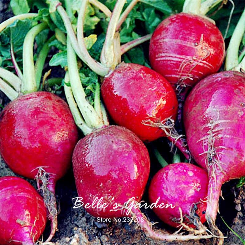100pcs Round Crimson Radish Seeds Imported Red Oganic Radish Home Garden Potted Plant DIY Fruit Vegetable Seeds