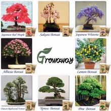 Mix of 8 Different Bonsai Seeds 240pcs total