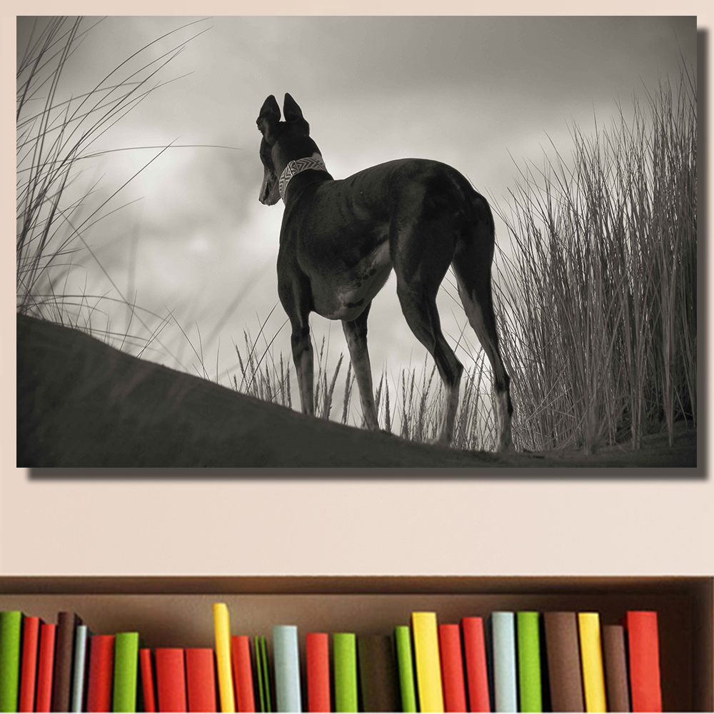 AAGG Black And White Greyhound Gazing Greyhounds CAN Sit oil painting on Canvas wall painting picture for Living Room No Framed