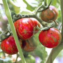 100, tomato seeds ,colorful tomatoes, vegetable seeds ,juice & sweet , little care ,productive