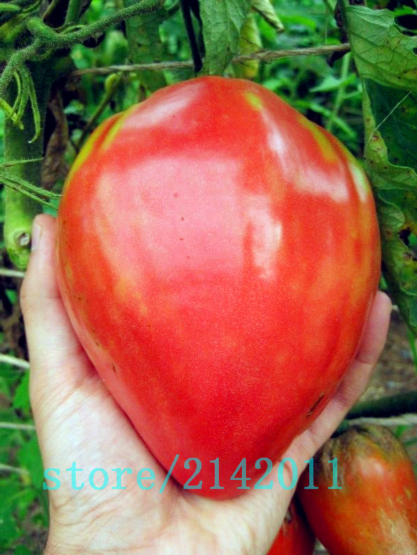 Heirloom giant red Tomato Seeds, strawberry tomato seeds, Professional Pack, 100 Seeds/Pack, Organic Vegetable plant for home garden