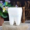 2 Pcs Tooth Shap Pastoral Style White Ceramic plant Pots Teeth model Flowerpot Flower Garden Pots Pencil Vase Dental gift