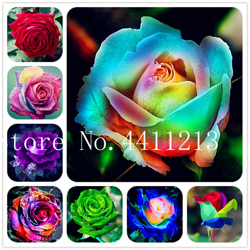 200 Pcs Rare Color Rose Bonsai Plant Rainbow Black Blue Rose Home Garden Perennial Plant Flower Exotic Bonsai Loss Promotion