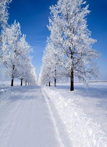 Blue sky vinyl background fabric snow road photography backdrops for photo studio photographic background camera fotografia