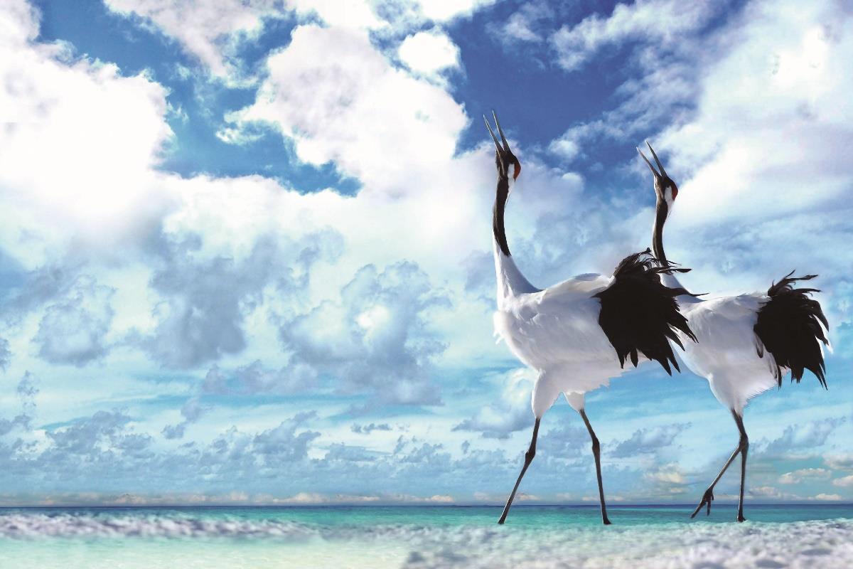 Animal Beach Bird elegant graceful white crane Cloud living Room home wall art decor wood frame fabric posters prints KE256