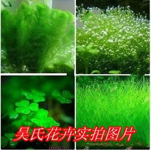 100% genuine mixed 200 seeds/pack Plants fish tank aquarium decoration grass seed aquarium plants seeds