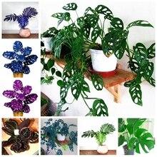 100 Pcs/ bag Rare Palm Turtle Leaves Monstera Bonsai Outdoor Potted Plant Tree Mix Home Perennial Foliage Plants Flower