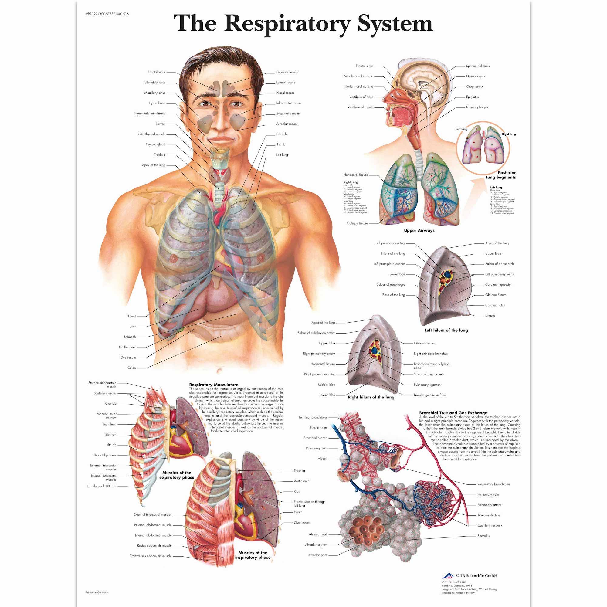 Anatomy Pathology Anatomical Poster Colon Cancer Chart Classic ...