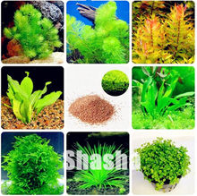 500pcs New Aquarium Grass bonsai, Aquarium Plants Fish Tank Decoration Easy Grow Double Sided Landscape Ornamental Aquatic Plant(China)