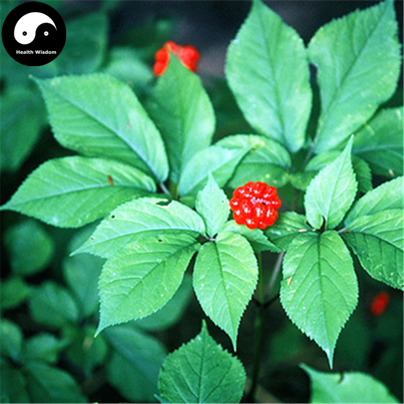 Buy Korean Ginseng Semente 50pcs Plant Chinese Tonic Herb Panax Ginseng For Gao Li Shen 流水 盆 養魚