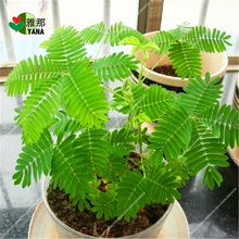 100 pcs/bag mimosa potted flowers fun bonsai seeds for home garden plant цены