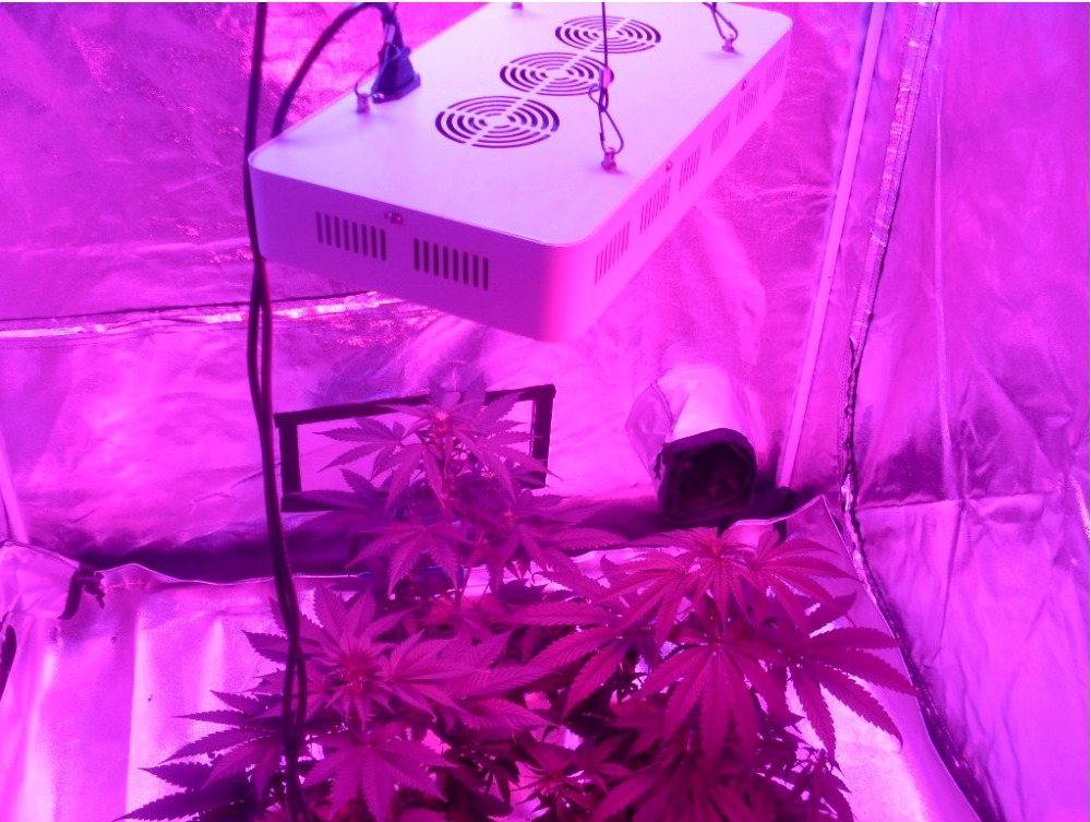 Deep Red LED Grow Lights, High Photosnythetic Active Radiation, Greenhouse Supplement, Night  Interruption, Additional Growth