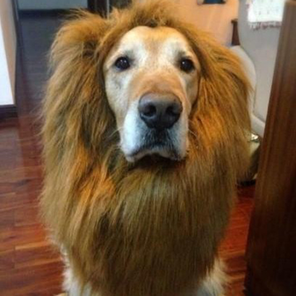 Pet Products Delicious Pets Acessorios Lovely Large Dogs Halloween Pet Apparel Cat Fancy Dress Up Clothes Lion Mane Wig Home & Garden