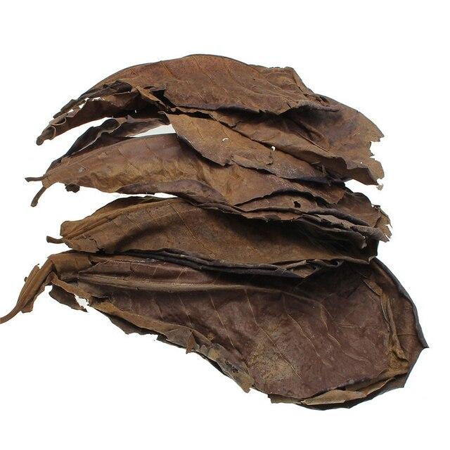 10 piezas de alta calidad Natural Terminalia Catappa hojas hoja de oliva del árbol de almendra Indio para el agua del acuario para balancear la acidez del PH