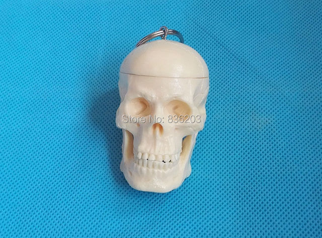 Mini Weibliche anatomie Menschlicher schädel modell skeleton kehle ...