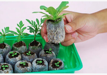 Free shipping,30pcs,25mm jify peat Planting, cutting,garden supplies,seed starter,vegetable seeds pellete.new planter need