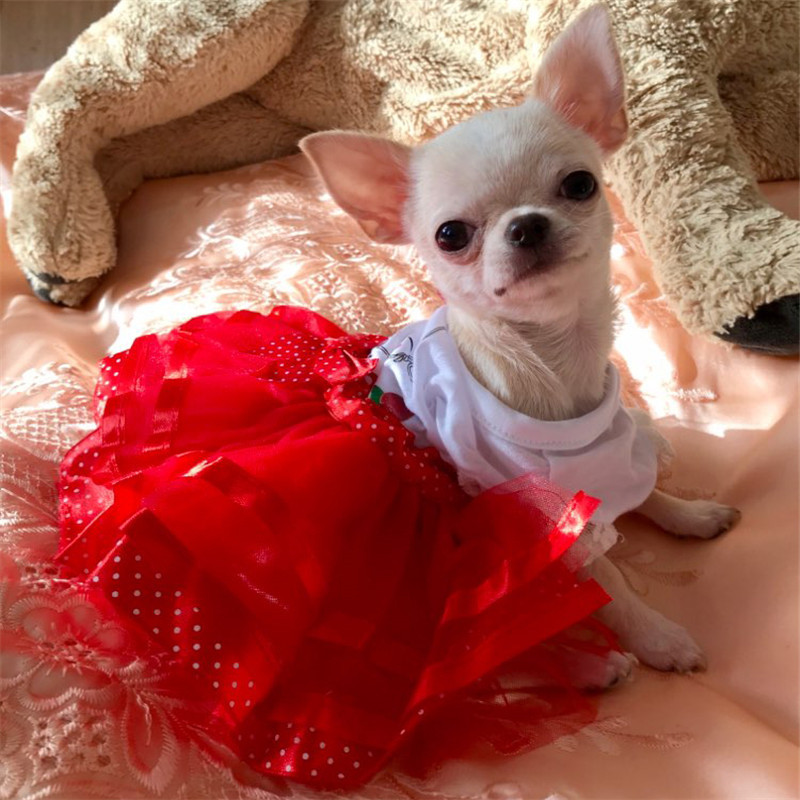 ba7d5c37e4e04 Cute Summer Dog Dress Pet Dog Clothes for Small Dog Wedding Dress Skirt  Spring Puppy Clothing Chihuahua Yorkie French Bulldog