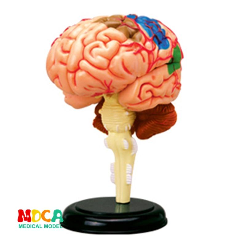 Brain 4d Master Puzzle Assembling Toy Human Body Organ Anatomical Model Medical Teaching Model