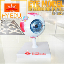 Medical teaching supplies Anatomy factory price quality biological Anatomical human eyeball model