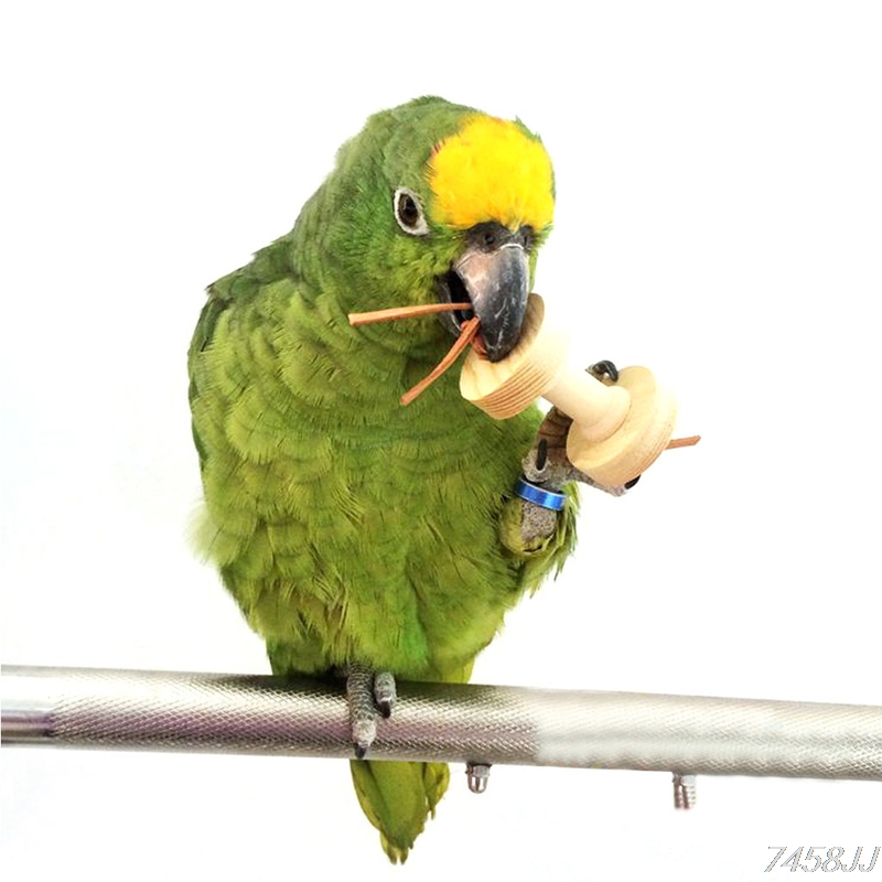Pet Bite Chew Toy Paw Grinding Toys Parrot Budgie Cage Clean Tool 0.59*3.15 Inch Random Color Oct17 Drop Ship Home & Garden Bird Supplies