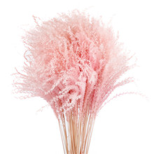 20pcs Wedding decoration pink reed grass dried natural phragmites flowers bouquets dried bouquets mixed color