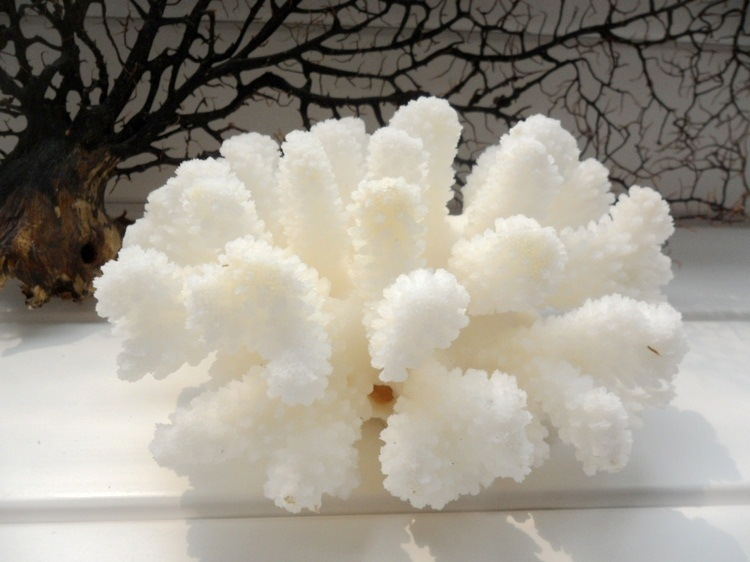 popular natural coral decor-buy cheap natural coral decor lots