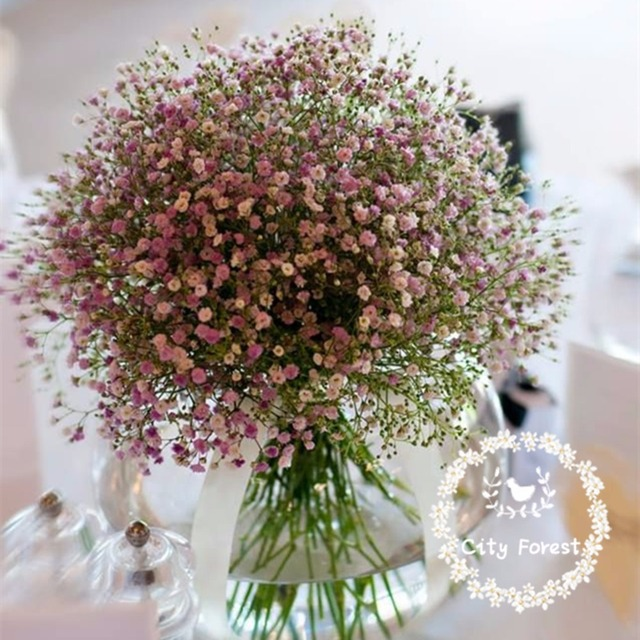 https://ae01.alicdn.com/kf/HTB16vs3JFXXXXc9XFXXq6xXFXXX3/Potted-flower-seeds-baby-s-breath-pink-Gypsophila-seeds-pink-baby-breath-about-100-particles.jpg_640x640.jpg