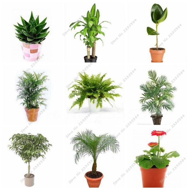 Small house plants palmpotted palmpalm house windowsill Best small office plants