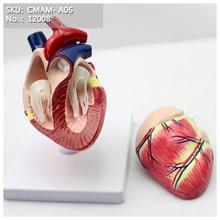 CMAM-A06 Собачье Сердце Модель, Животных, Анатомические Модели для Ведения Ветеринара