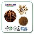 100% Puro Extrato de Cordyceps sinensis 30: 1 frete grátis 50g