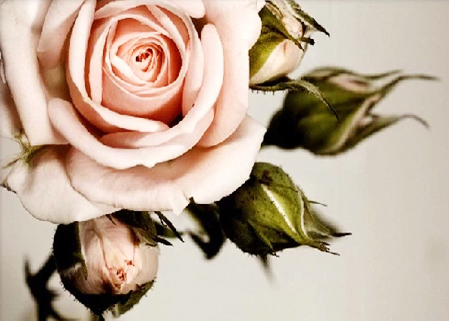 Diamond Вышивка 5D DIY алмазов картина розовый розами Вышивка с кристаллами Rhinestone Мозаика