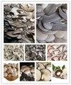 Envío libre 50 semillas/bolso mezclado comestible hongo pleurotus cepas geesteranus semilla bonsai en maceta de plantas de BRICOLAJE para el hogar jardín