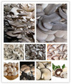 free shipping 50seeds/bag  mixed edible pleurotus mushroom strains geesteranus seed bonsai potted plants DIY for home garden