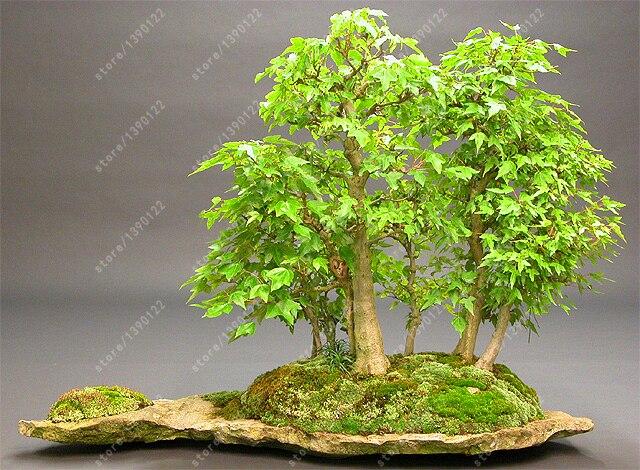 яванский мох купить на алиэкспресс