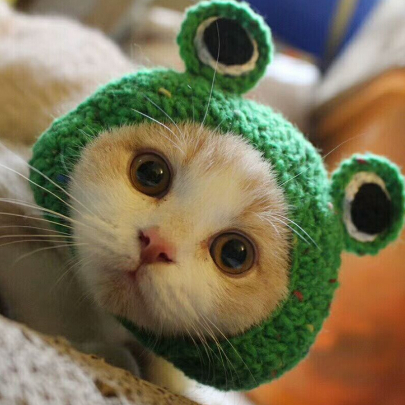 Knitting Cute Animal Cat Puppy Frog Hat Winter Autumn Handmade Cotton Party Funny Dog Cap Accessories For Little Small Pet Goods