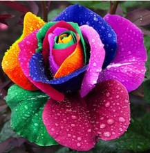 GGG Free shipping 100pcs Beautiful Rainbow Rose Seeds Multi-colored Rose seeds Rose Flower Seeds(China)