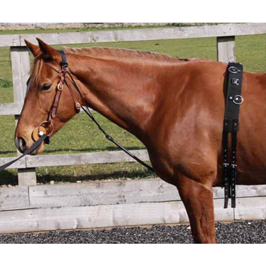 S/M/L Equestrian Lunging Training Adjustable Nylon Lunge Roller Surcingle with Girth & D Ring adjustable pro safety equestrian horse riding vest eva padded body protector s m l xl xxl for men kids women camping hiking