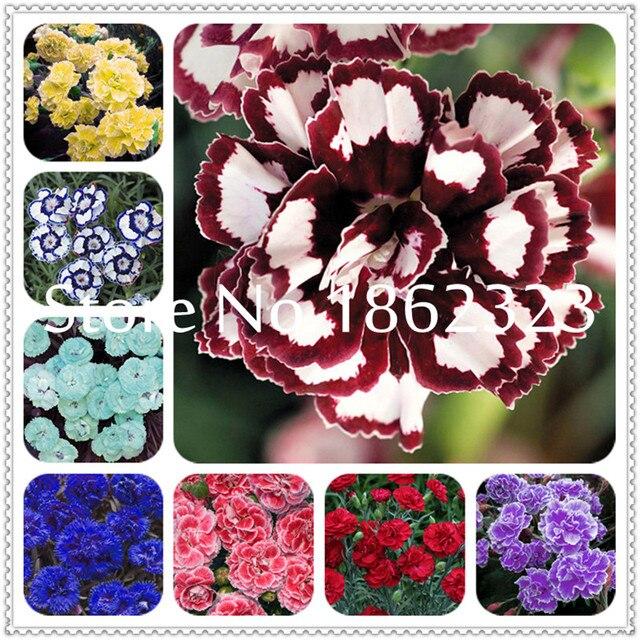 200 pca Редкие гвоздики бонсай цветы бонсай садовая Гвоздика цветы бонсай для дома садовое насаждение подарок для мамы