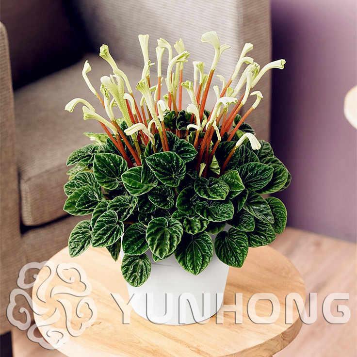 Доставка экзотические цветы на дома, букет невесты букет руками из роз