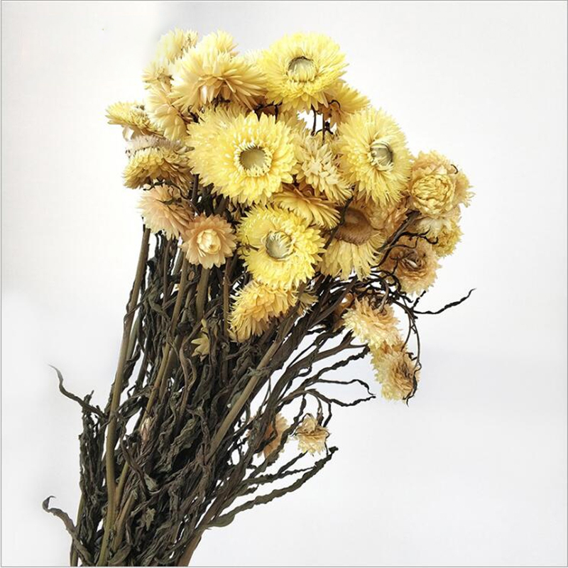 MiHuaGe Natural Dried Flowers Little Daisy Simulation Decoration Artificial Preserved Flower Dry Flowers Wedding Party Decor in Artificial Dried Flowers from Home Garden