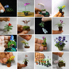 100pcs / bag Rare butterfly orchid flower seeds, a variety of styles of bonsai flower seeds. Plant family garden