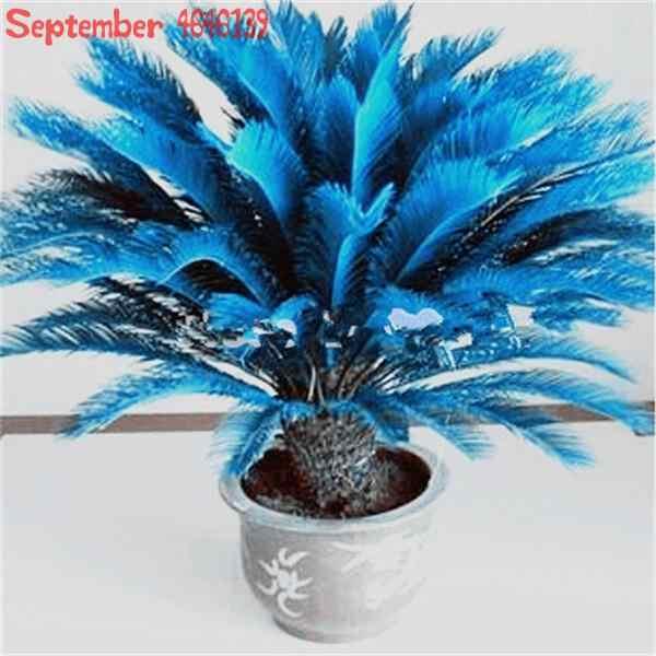 Мини Cycas bonsai, 10 шт синий Cycas, мини саговая Пальма дерево. Бонсай цветок, Частота подъема 97% Редкие комнатные горшечные растения для домашнего сада