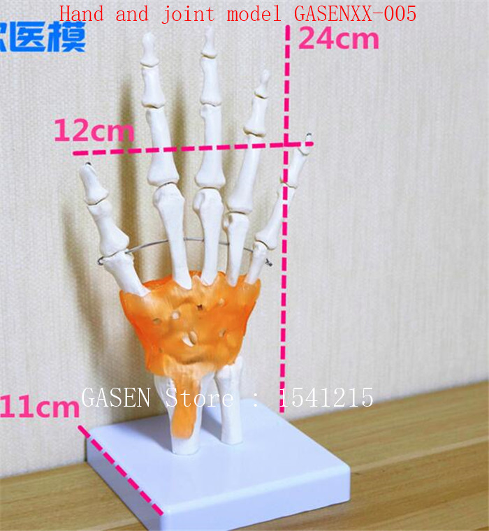 palm Skeleton model With toughness Teaching medicine Body section model Hand and joint m ...