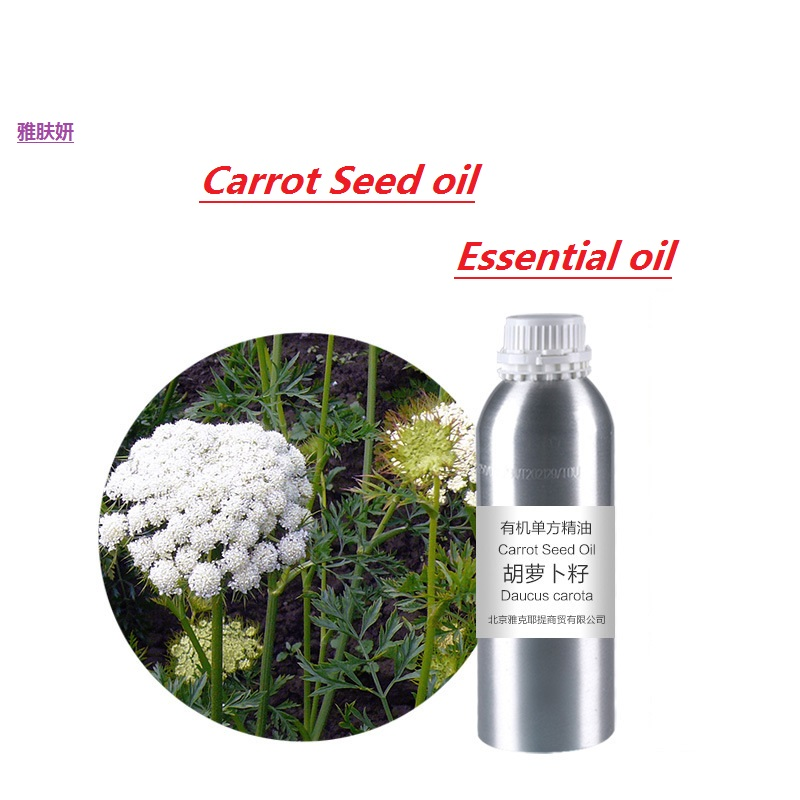 massage oil 50g-100g/bottle carrot seed  essential oil organic cold pressed  vegetable & plant oil skin care oil free shipping organic natural plant oil 100