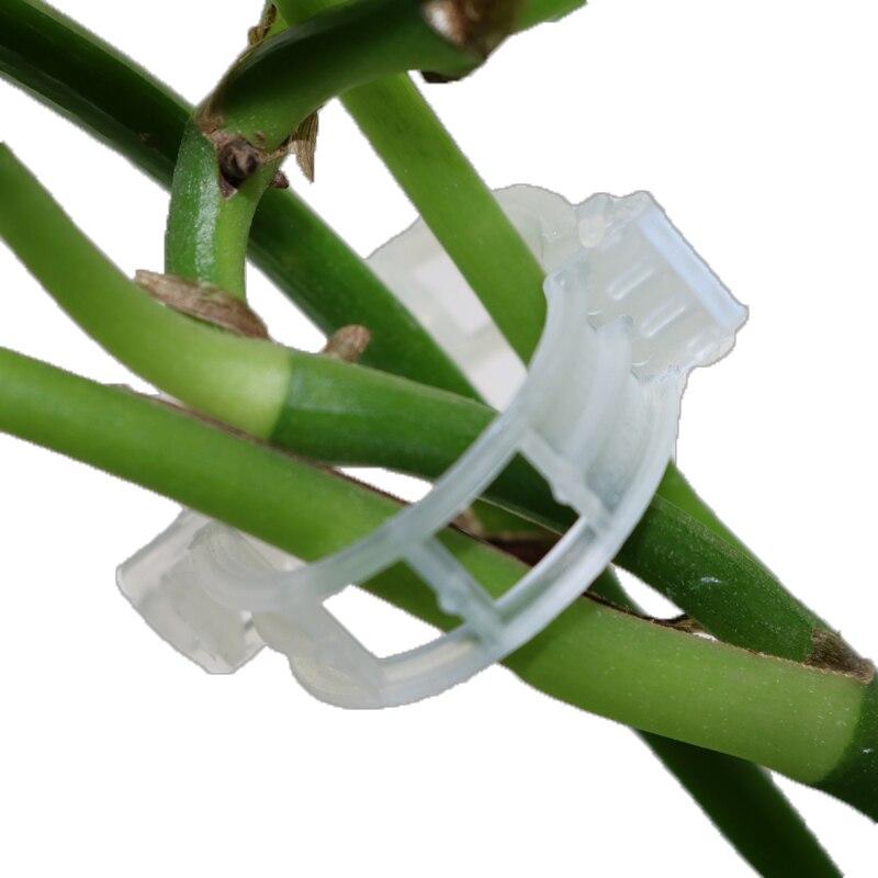 Крепежные зажимы для теплицы, садовые растения, цветы, связка, пучок, зажим для ветки, Зажимные инструменты, Садовые принадлежности, зажимы для растений, 50 шт