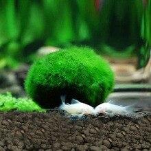 Aquarium Plant Marimo Moss Ball Greening Shrimp Cylinder Green 4-5cm Beautiful Easy Living