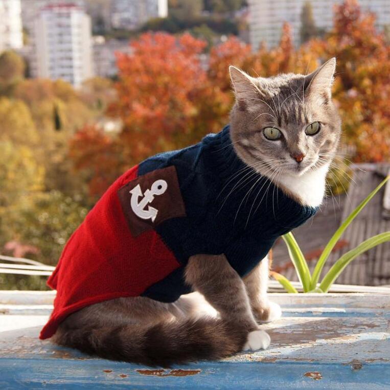 molto carino fd11d 45d48 US $5.27 45% di SCONTO|NEW Vari Colori di Autunno della Molla Ha Lavorato A  Maglia Del Maglione Del Gatto Pet Jumper Gatto Vestiti Della Maglia Per ...