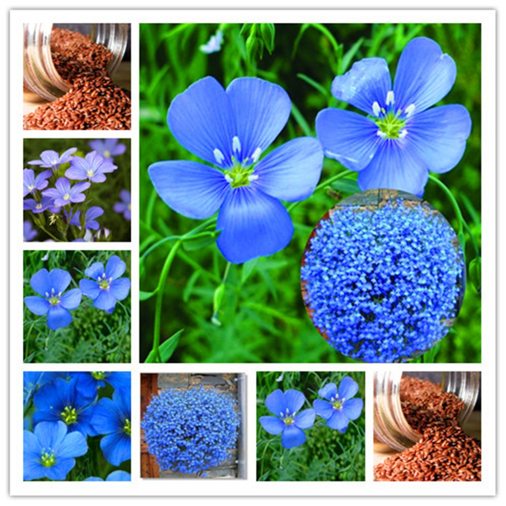 Image result for flax seed